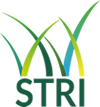 STRI open job positions